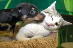 puppy licking cat